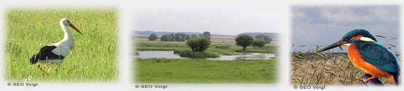 nature reserve Mähried Staden